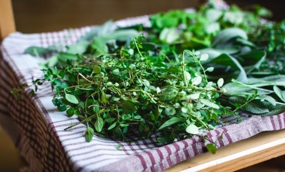 Curarsi con le erbe: ecco alcuni rimedi naturali