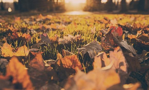 Idee outfit alla moda per l'autunno