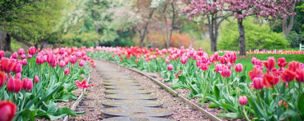 Simple idee arredo giardino vediamo come organizzare il - Organizzare il giardino ...